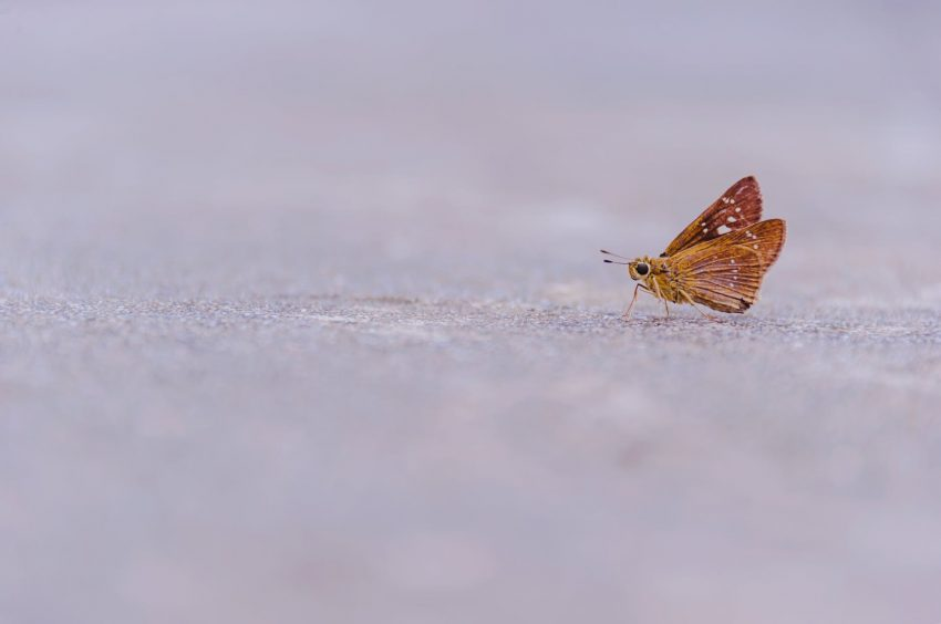 brown butterfly on ground