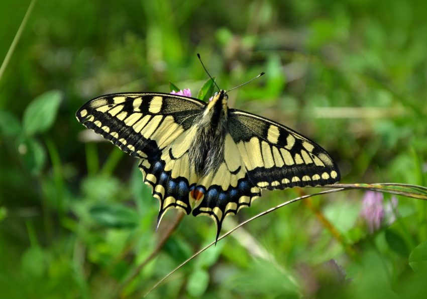 nature summer insect butterfly