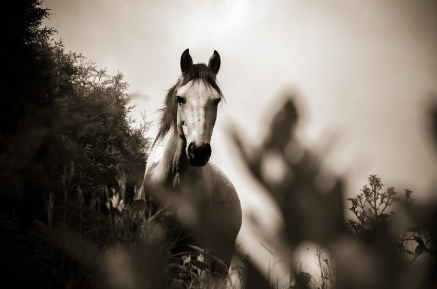 grayscale photo of horse