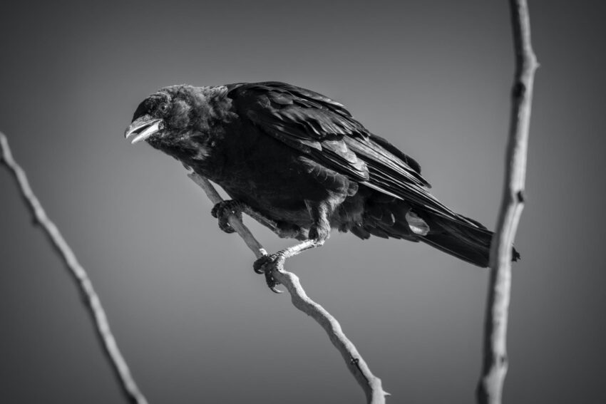 grayscale photo of bird perched on branch