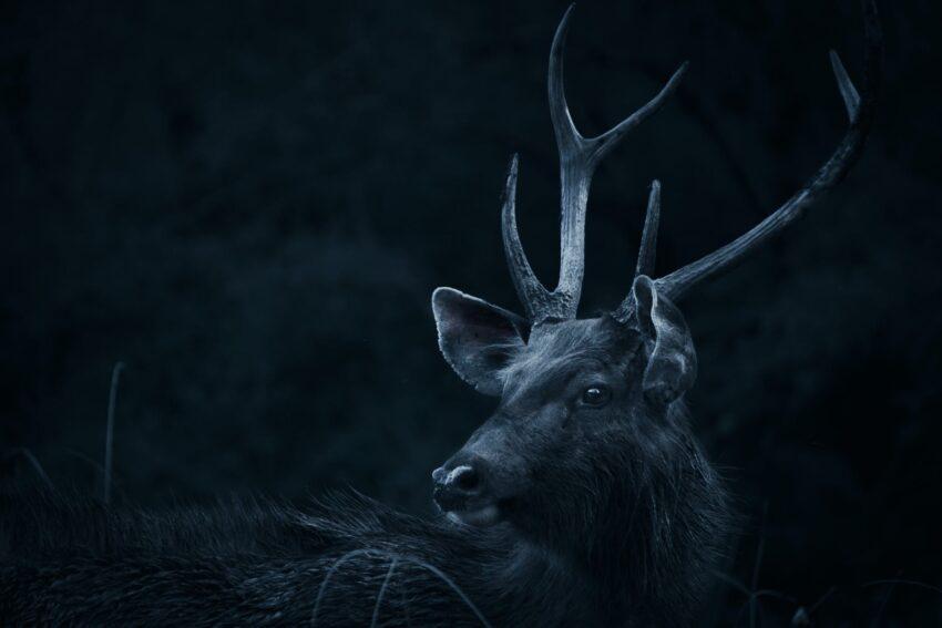 deer looking backwards
